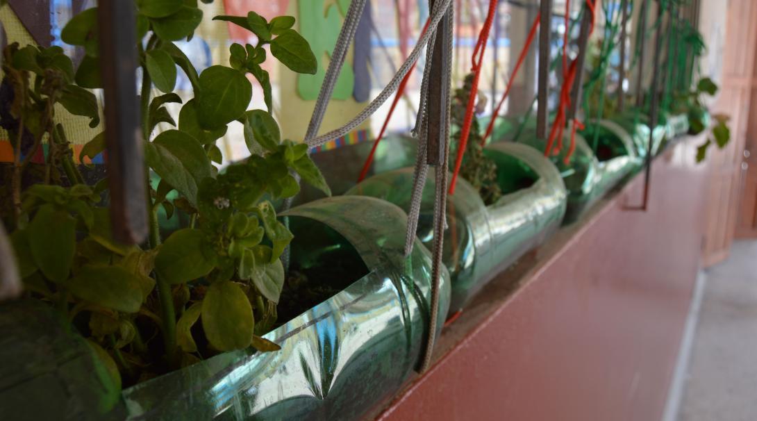 En rad av växter som växer i tunnor gjorda av återvunna plastflaskor i ett klassrum i Sri Lanka.